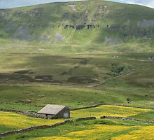 A Dales barn in the buttercups by Judi Lion