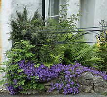 Cottage garden by Judi Lion