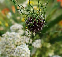 wild flowers 4 by vigor