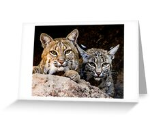 Two Bobcats Greeting Card