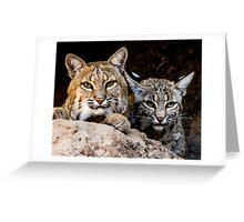 Two Bobcats Greeting Card