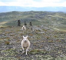 Sheep by Ethuil