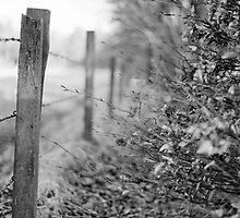 Aberdeenshire by Louise Bichan