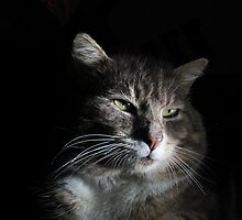 Portrait of tabby cat with black background by turniptowers