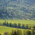 Green landscape around Perugia - Italy by Arie Koene