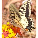 iPad Case - Swallowtail Butterfly On Flower by Francis Drake