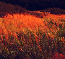 Warm Grass by Paul Shellard