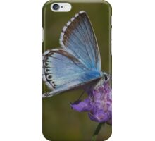 Chalkhill Blue male iPhone Case/Skin