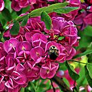 Purple Robe - Black Locust by T.J. Martin