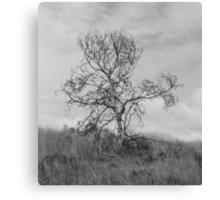 Lone Tree Canvas Print
