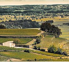 vintage vineyard landscape by saaton