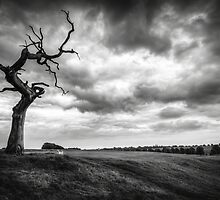 Beverley Westwood by Neil Cameron
