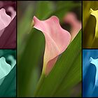 Calla Lily Collage #1 by Andy Turp