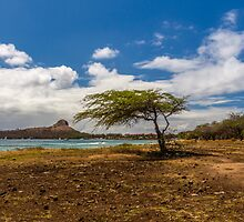 Tree & Pigeon island by LacoHubaty