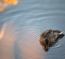 Serenity the Duck by AnniqueMaujean