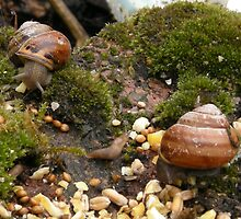 snails and slugs eating bird seed by samandoliver