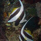 Bannerfish Couple by Mark Rosenstein
