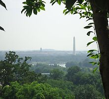 Above D.C. by Laura-Jo