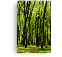 Forest background Canvas Print