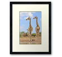 Giraffe - African Wildlife Background - Stare of Symmetry Framed Print
