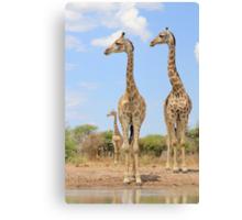 Giraffe - African Wildlife Background - Stare of Symmetry Canvas Print