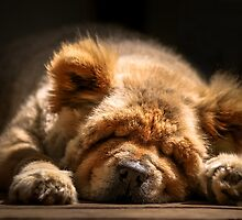 Snooze - Ms Tea Chow-Chow by Tom Klausz