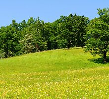 Beautiful countryside landscape with flowers by Stanciuc