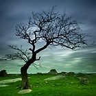 Dog Rocks Tree by Noeline R
