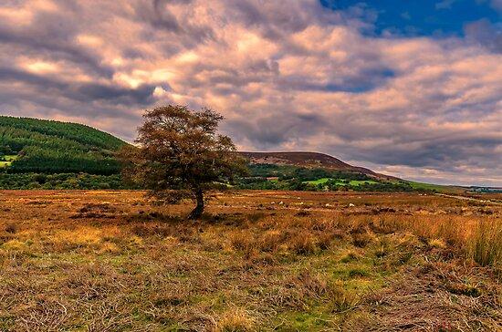 North Yorks Moors by Trevor Kersley