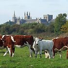 Cattle and Cathedral by Dennis Wetherley
