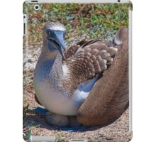 Ecuador. Galapagos Islands. Blue-Footed Booby with the eggs. iPad Case/Skin