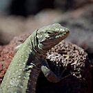 Tenerife lizard by Rachel Kelly