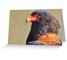Bateleur Eagle - African Wildlife - Colorful Power Greeting Card
