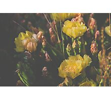 Yellow Prickly Pear Photographic Print