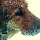 One Wet Kodi by Susan Bergstrom