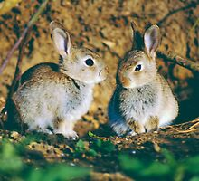 Baby rabbits  by areyarey