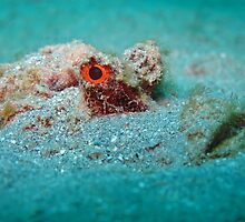 Red Sea Walkman by ramisaleh