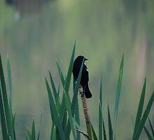 The Watch Bird by vigor