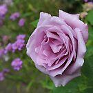Blue Rose by AnnDixon