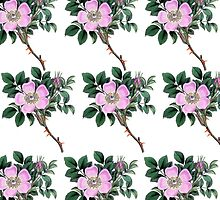 Dog Rose - Flowers, Petals, Leaves - Pink Green by sitnica