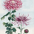 Chrysanthemum Flowers, Petals, Leaves - Pink Green by sitnica
