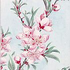 Peach Blossoms, Petals, Leaves - Pink Green by sitnica