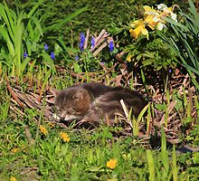 Tabby cat sleeping in garden by turniptowers