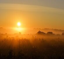 Golden Morning by LynyrdSky