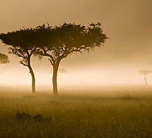 Masai Mara #2 by António Jorge Nunes