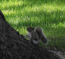 Frisky Squirrel by TScottAdams