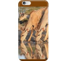 Kudu - African Wildlife Background - Reflection of Pleasure iPhone Case/Skin