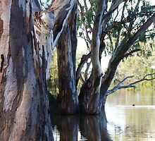Trees along the River Murray by Samantha Kotz