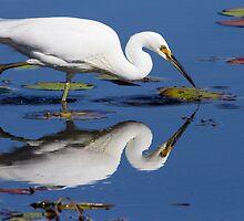 Mirror Mirror by byronbackyard