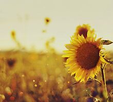 Sunflower Bokeh by Indea Vanmerllin